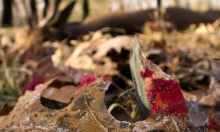 4 Things To Keep In Mind When Following a Blood Trail
