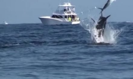 AMAZING BLUE MARLIN FOOTAGE – A MUST SEE !!!