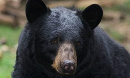 Black Bear Attacks Man, He Stabs it With an Arrow Until it Leaves Him Alone