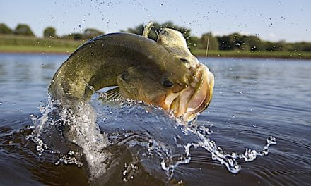 Can't-Miss Lure Tactics to Catch Fall Bass
