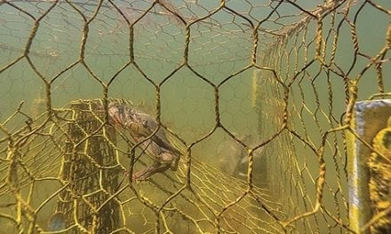 Derelict pots killing 3.3 million crabs annually in the Bay