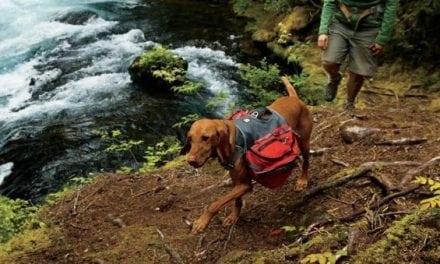 Dog Owners, Don't Miss These Important Tips for Hiking with Dogs