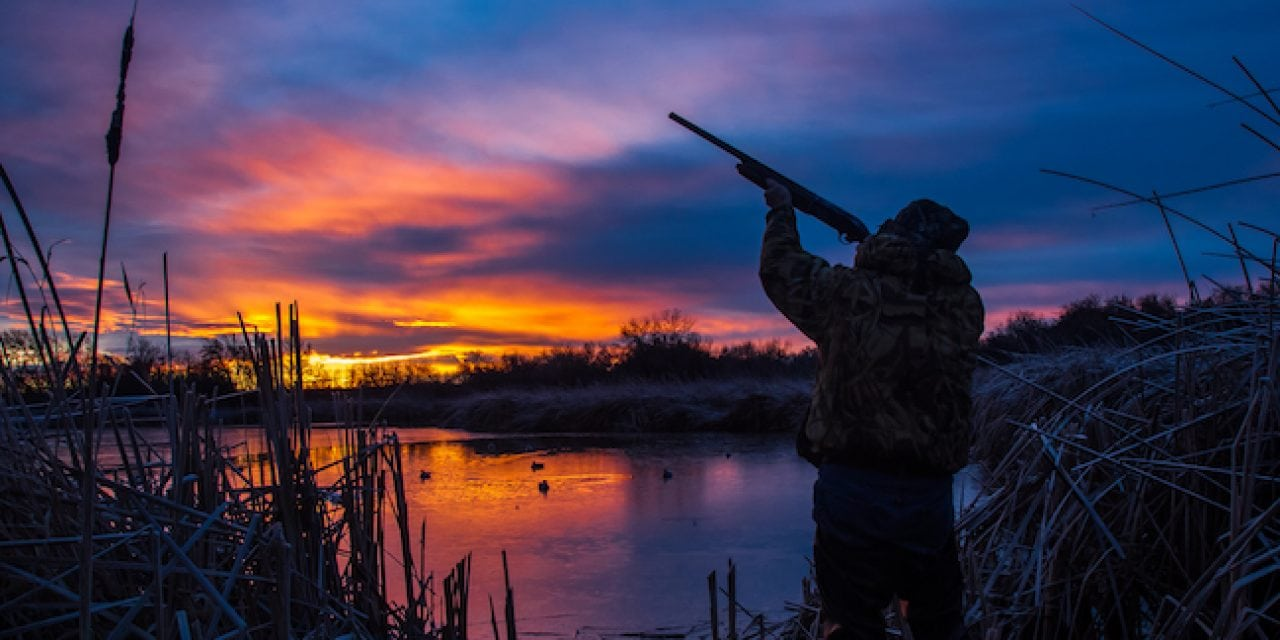 Early Waterfowl Action Tips in Missouri