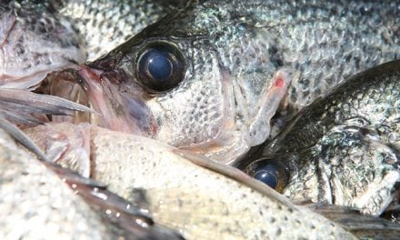 Fall Fishing for Crappie, Walleye, Bass, Catfish, 'Wipers'