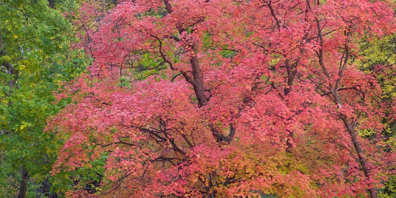 Five Favorite Fall Color Tips