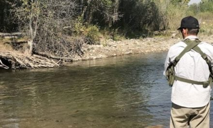 "Fly Fishing On the Gallatin River for ""The Monster Brown"""