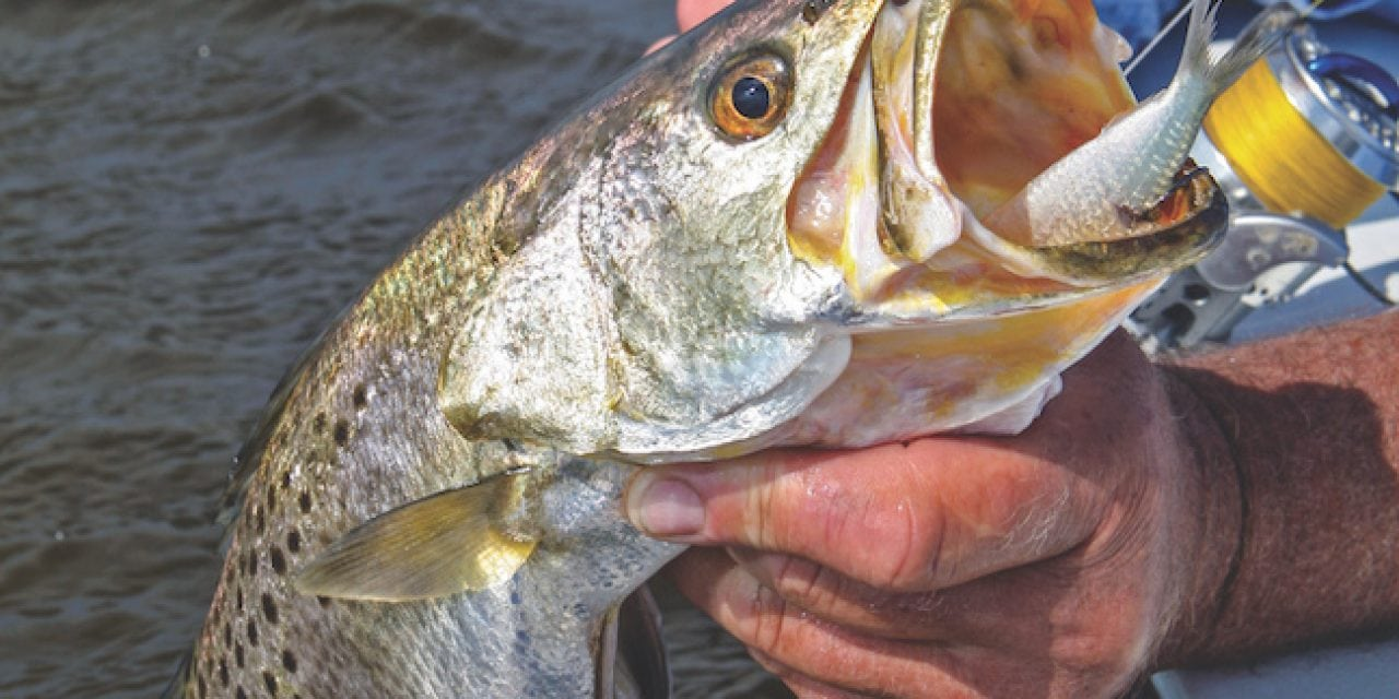 Hot Fall Inshore Fishing for Reds, Trout, Flounder & More