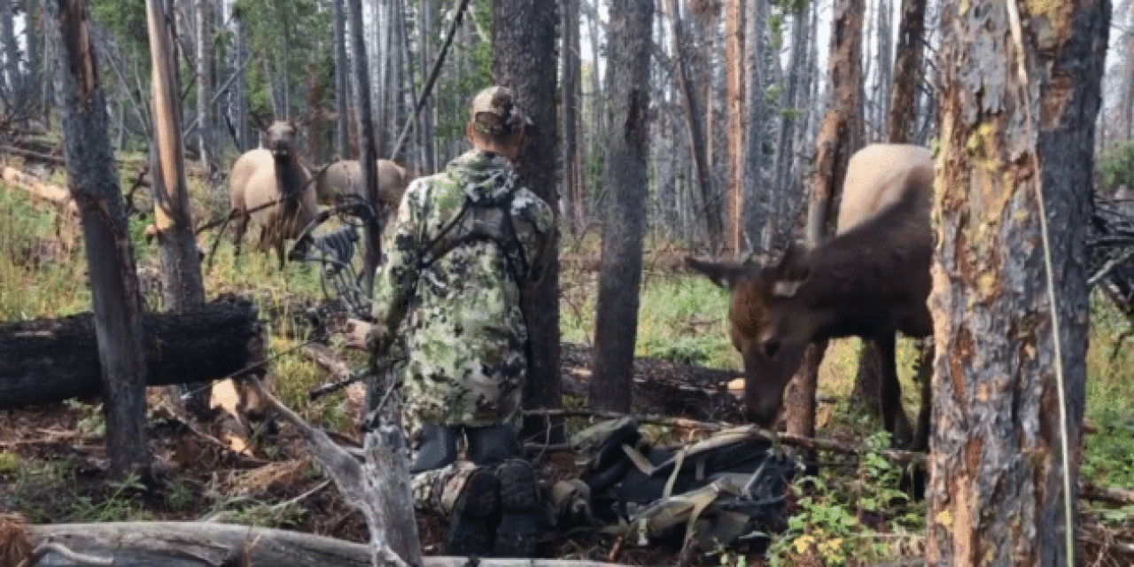 Hunter Sits Still in Middle of Elk Herd: Watch What Happens