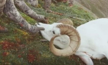 Hunting Dall Sheep With A Bow Is One Tough Challenge