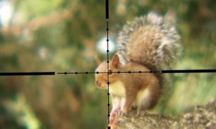 Hunting Squirrels with a .30 Caliber Air Rifle is as Intense as You'd Think