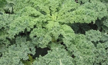 I Tried Planting Kale in a Food Plot and Here's What I Learned
