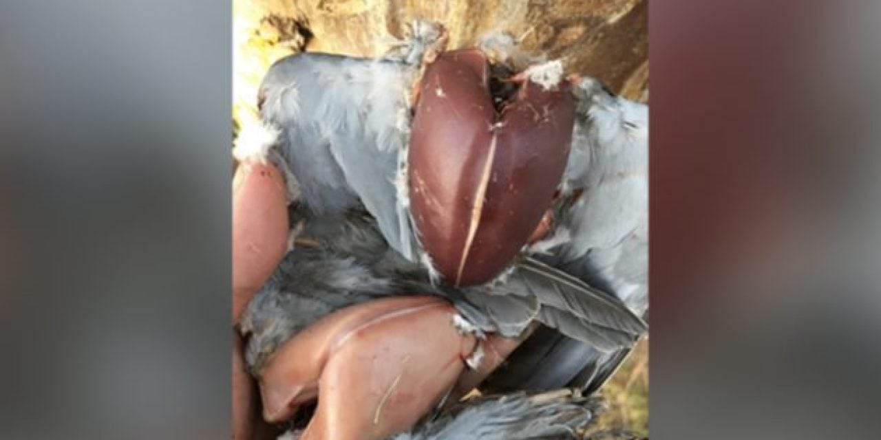 Instagram Took Offense to These Bare-Breasted Doves, Here's What This Hunter Did
