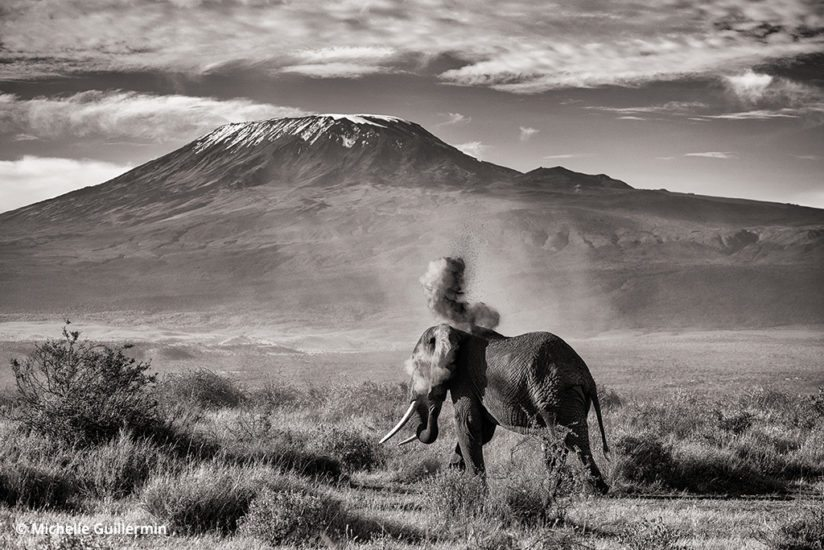 Elephant and Kilimanjaro, Kitenden Wildlife Corridor