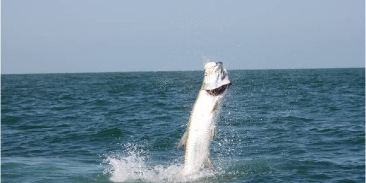 Knowing how to catch a giant tarpon is half the battle