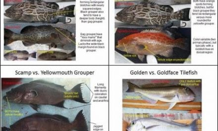 NOAA Online Species Guide Is Now Available