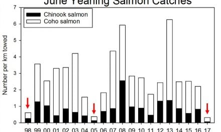 Ocean surveys show poor outlook for Columbia salmon
