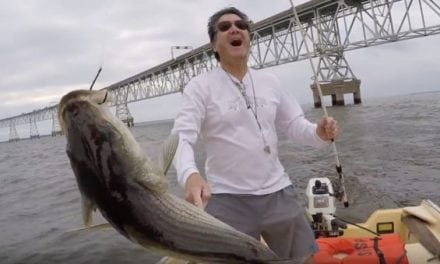 Saltwater Fishing Challenge: Live Bait vs. Artificial Lures