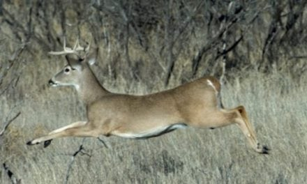 Scout for Deer Without Making These Mistakes