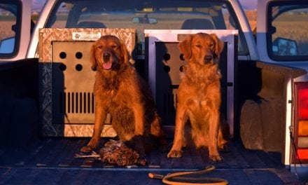 'Steady to Shot' Tips for Training Waterfowl Dogs