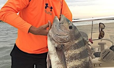 'Strong Tug' Results in State Record Sheepshead