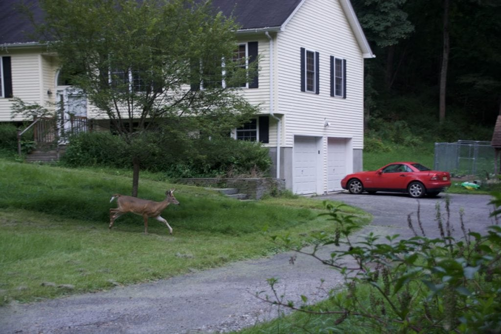Hunting Suburban Deer - By Tom Keer