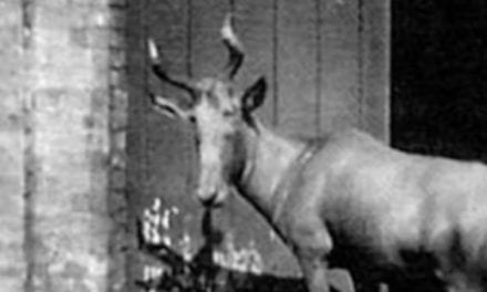 These 10 Animals Were Hunted to Extinction Before Today's Management Systems Were Developed