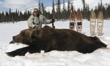 These Are The Biggest Grizzly Bear Kills In The Record Books