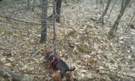 This is How Fast a Good Tracking Dog Can Find a Wounded Deer
