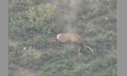 This Might Be the Most Epic Elk Tumble of All Time