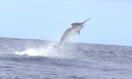 Video: Epic African Fishing Trip Ends with a Giant Marlin Surprise