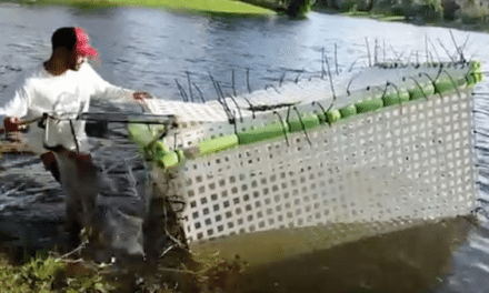 Video: Guy Puts 'Caged' Fish Back Into the Pond After Hurricane Irma