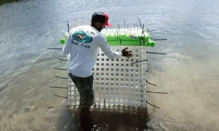 Video: Guy's Enormous Fish Cage Aims to Save His Fish from Hurrican Irma