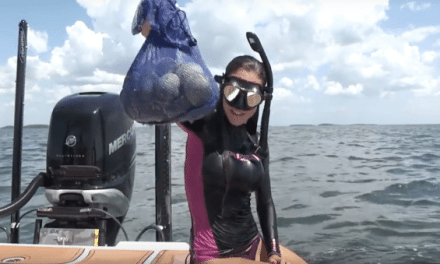 VIDEO: Learn the Basics of Scalloping with Luiza