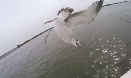 Video: Lunkers TV Accidentally Snags a Seagull Out of the Sky While Bass Fishing
