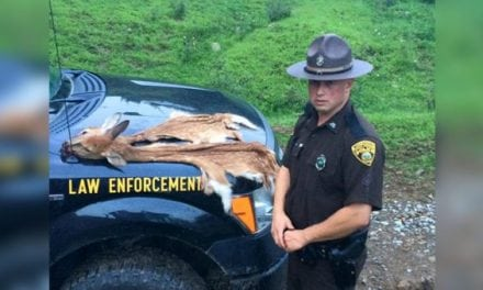 West Virginia DNR Catches Fawn Poacher