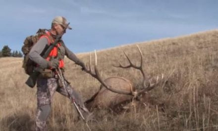 You Need to Watch These 10 Elk Hunting Videos Before the Season Starts