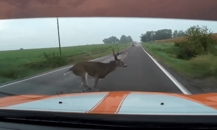 A Deer Comes Out of Nowhere and Totals a Dodge Charger