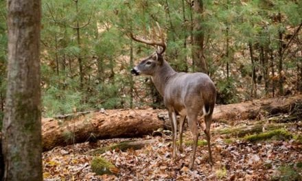 Deer Season is Here, Are You Ready?