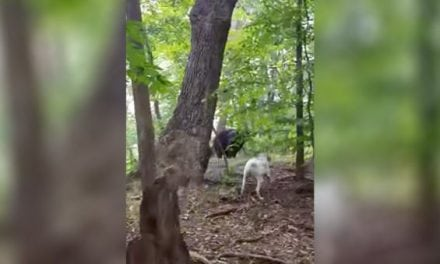 Dog Chases Away a Bear, 'Cause He's Just Doing His Job