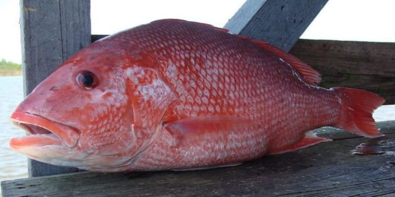 Florida's East Coast to Get First Red Snapper Fishing in Over a Year