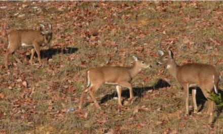 Is It OK to Shoot a Doe with Fawns?