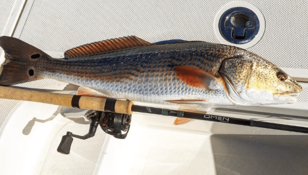 Patterns for Early Winter Redfish
