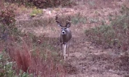 Pow Baby Pow! Watch This Texas Buck Go Down
