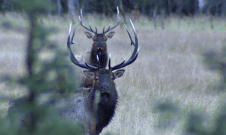 RMEF's New Film Defines Hunting Success