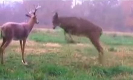 Smile of the Day: Bucks vs. Decoys That Just Fooled Them