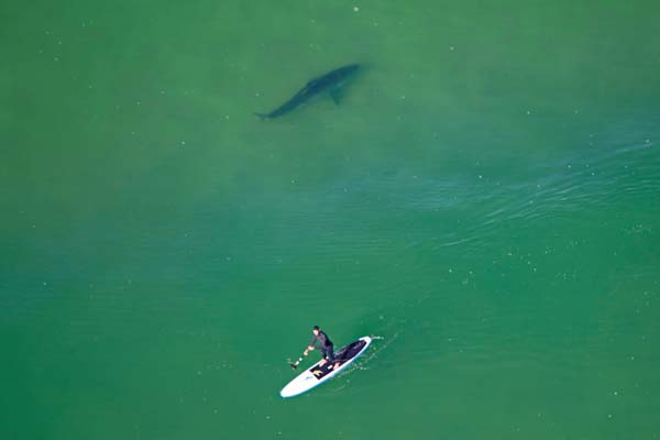 Spotting Sharks From The Air