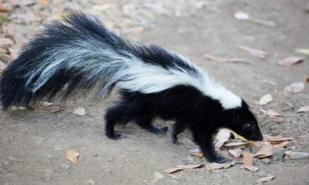 Texas Teen in His Underwear Gets Ticket for Hunting Skunk and Rabbit Off the Roadside