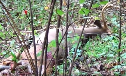 Video: Bowhunter Gets Lucky with a Bad Shot