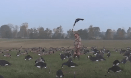 Video: Early Goose Hunting at Basswood Lodge Looks Fantastic