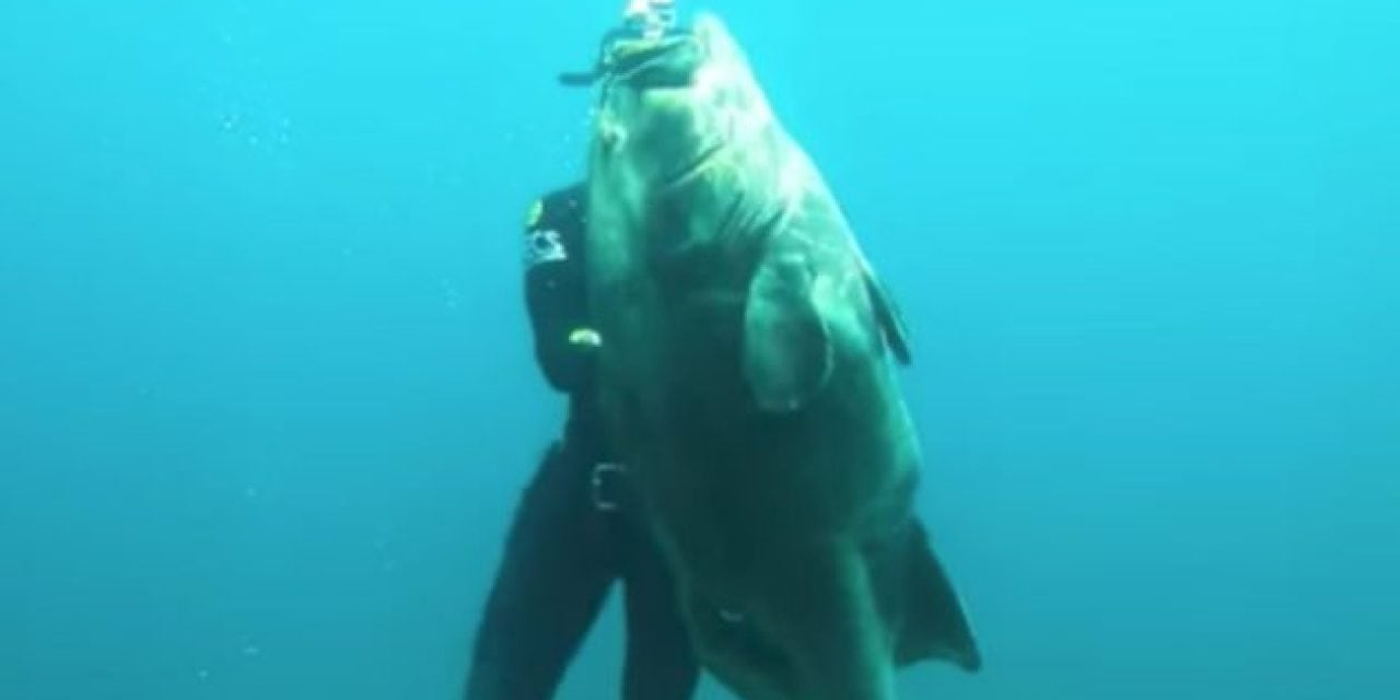 Video: Epic Spearfishing Grouper Shots